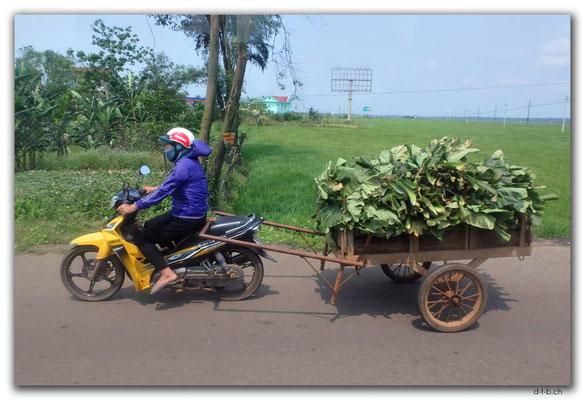 VN0148.Vinh Moc.Bananenblättertransport