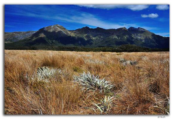 NZ0519.Kahurangi N.P.Wharepapa Arthur Range