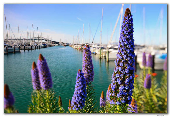 NZ0256.Auckland.Westhaven