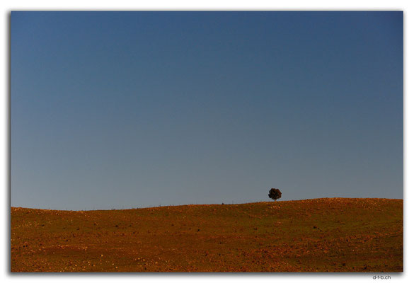 AU1494.Monaro Hwy.Lonely tree