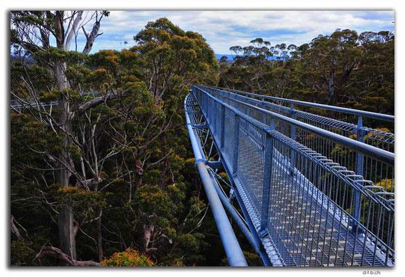 AU0789.Tree Top Walk