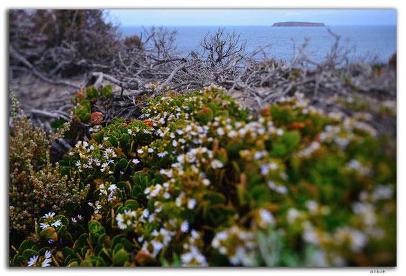 AU1015.Coffin Bay N.P. Point Avoid