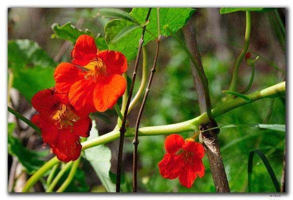 GR0481.Kournas-See.Blume