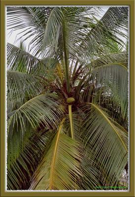 169.Palme,Bocas del Toro,Panama