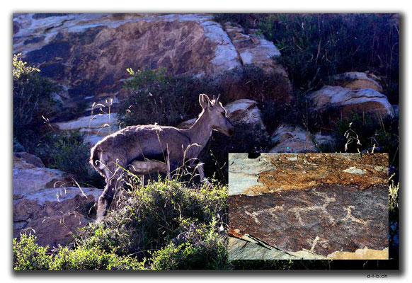CN0243.Deer & Rock Art of Helan Mountain