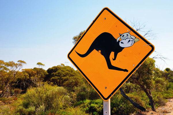 Australien.Kängukuh
