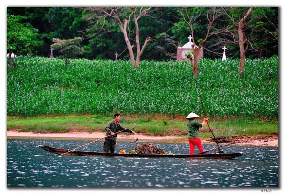 VN0106.Phong Nha.Fluss.Seegrasernte