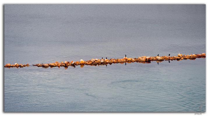 AU1463.Lakes Entrance.Cormorants