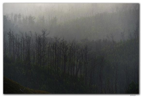 AU1444.Arthur Pieman Conservation Area.Forest in the mist