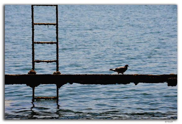 AU1073.Port Pirie.Steg mit Taube