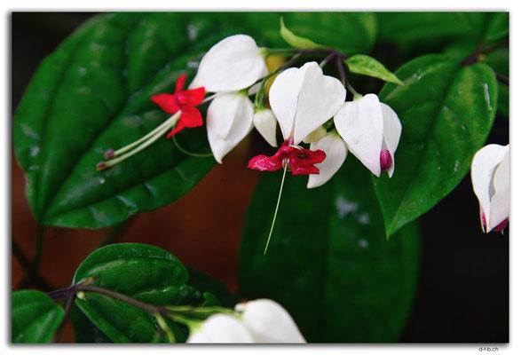 ID0035.Denpasar.Blume