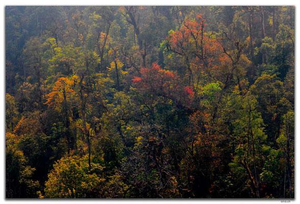 VN0082.Sapa.Fansipan.Wald im Gegenlicht