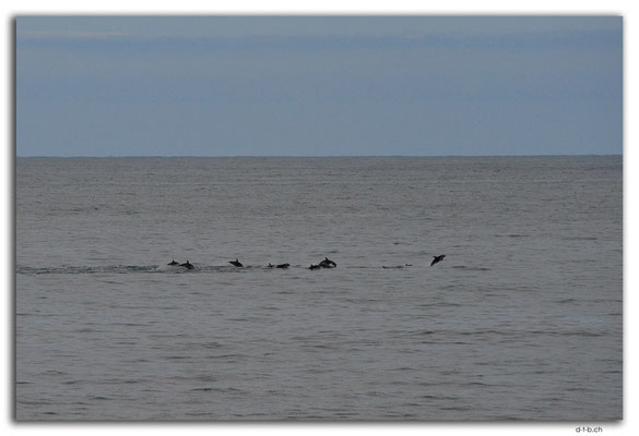 NZ0696.Ta Ana Pouri.Delfine