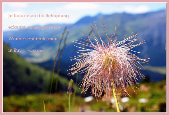 S0156.Wildmannli.Klosters,CH