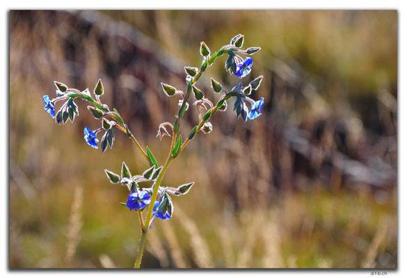 AU0334.Karratha.Blume