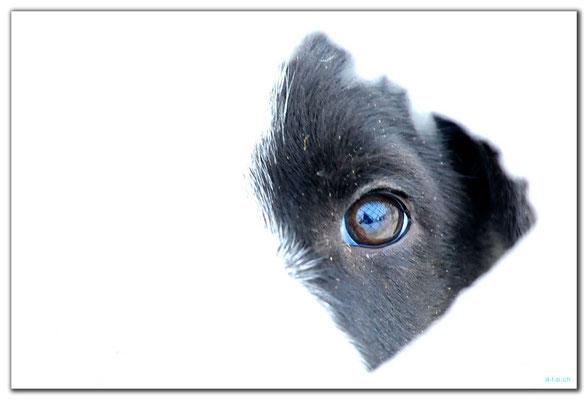 SE0092.Puppie