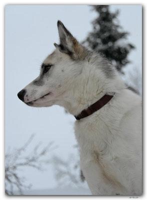 SE0117.Husky,Vamos