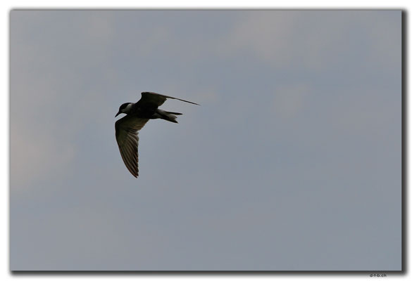 IR0005.See bei Astara.Vogel