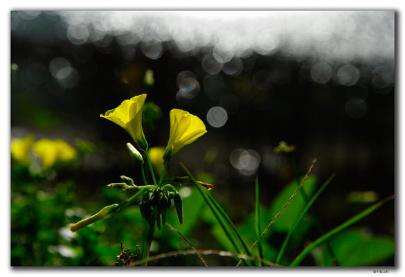 GR0482.Kournas-See.Blume