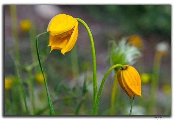 CN0167.Blume