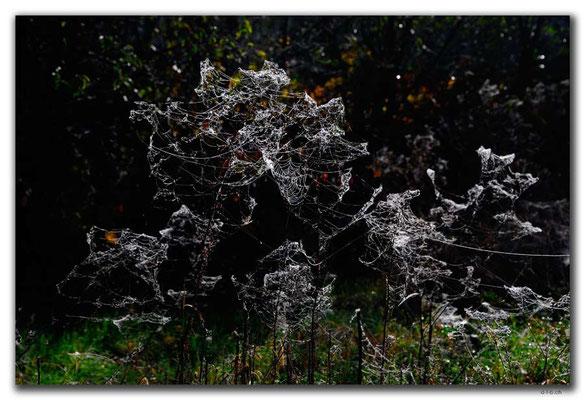 RO0099.Hoghiz.Spinnweben