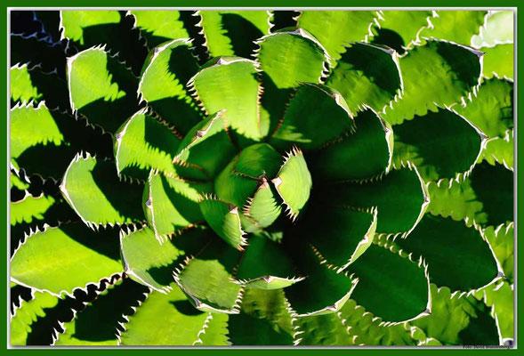 LAN024 Jardin de Cactus