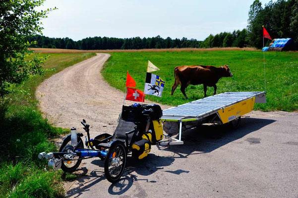PL: Solatrike und Kuh