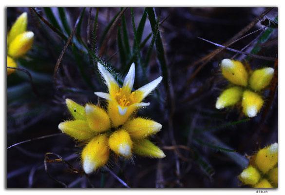 AU0642.Mt.Observation.Blume