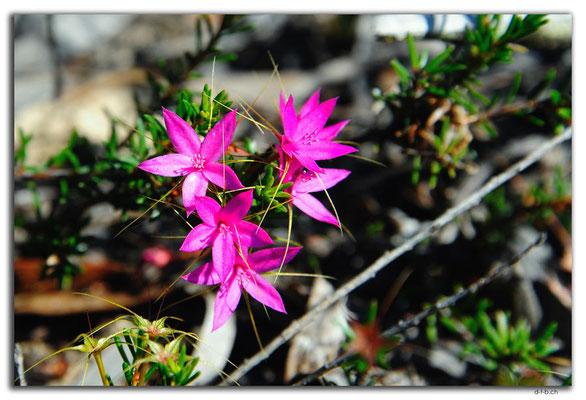 AU0837.Neds Corner Rd.Blume