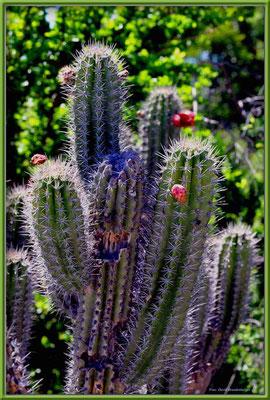 JM118.Kaktus.Portmore