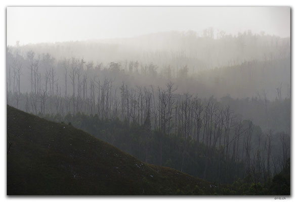 AU1442.Arthur Pieman Conservation Area.Forest in the mist