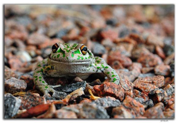 AU0877.Grass Patch.Frosch