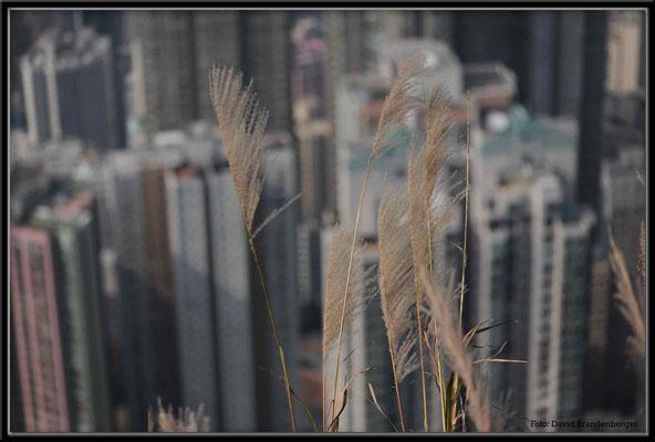 C2643 Hong Kong Victoria Peak
