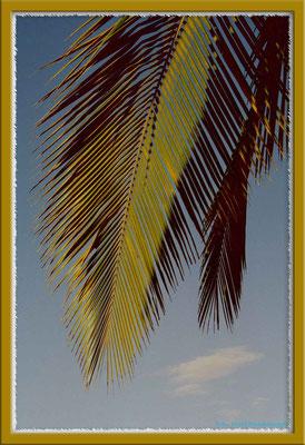 170.Palme,Las Lajas,Panama