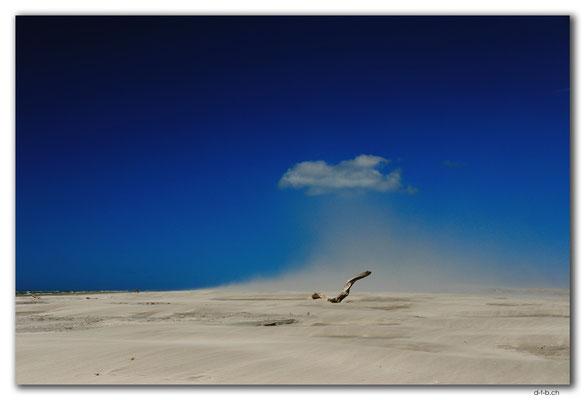 NZ0611.Farewell Spit.Ocean Beach.Drift wood