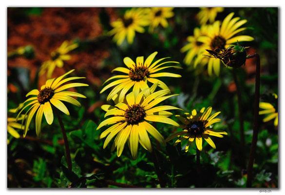 AU0419.Blumen