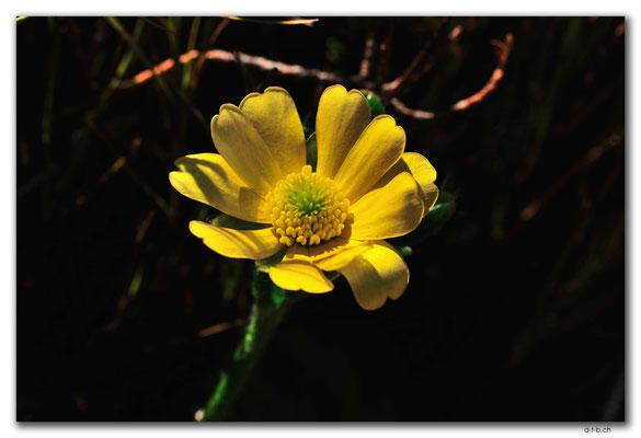 NZ0376.Egmont N.P.Blume