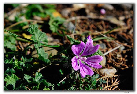 GR0498.Agia Triada.Blume