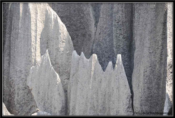 C0865Stone Forest