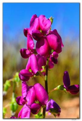 AU0368.Orchidee