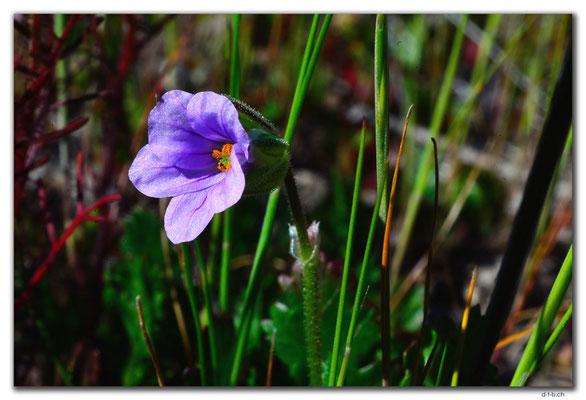 AU0543.Blume