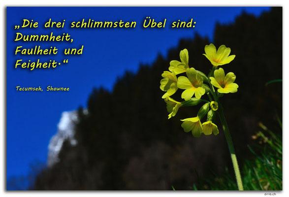 S0298.Schlüsselblume und Wetterhorn.Switzerland.Tecumseh, Shawnee
