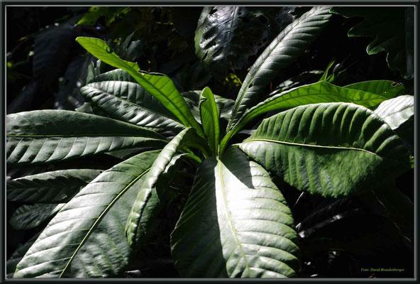 JM061.RPR Blätter