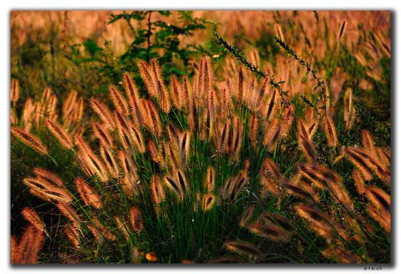 KR0141.Daegu.Pflanzen im Gegenlicht