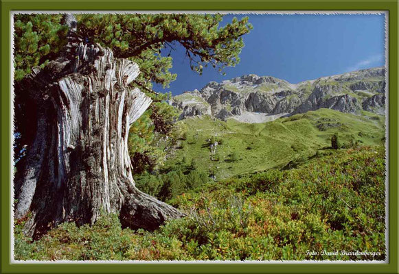 A0196.Casanna.Klosters.CH