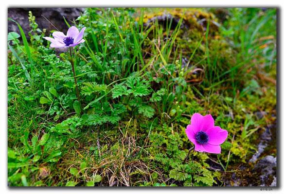 TR0199.Kayaköy.Blumen