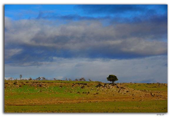 AU1499.Monaro Hwy.Lonely tree