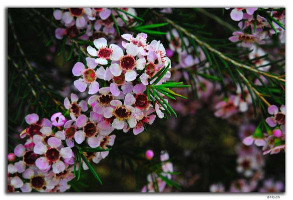 AU0483.Northampton.Blumen