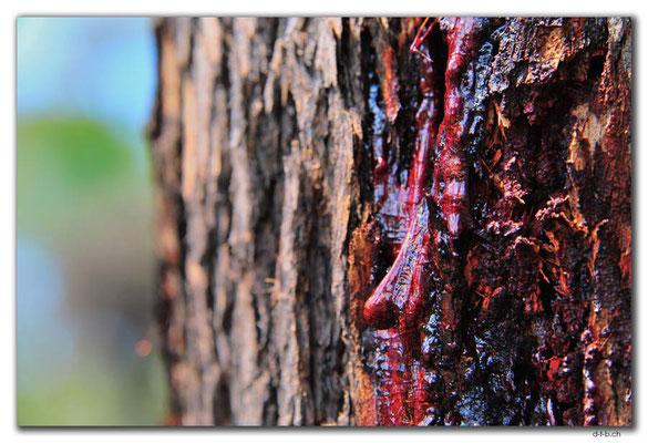 AU0680.Greenmount N.P.Red Gumtree