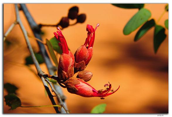 AU0254.Baumblüte
